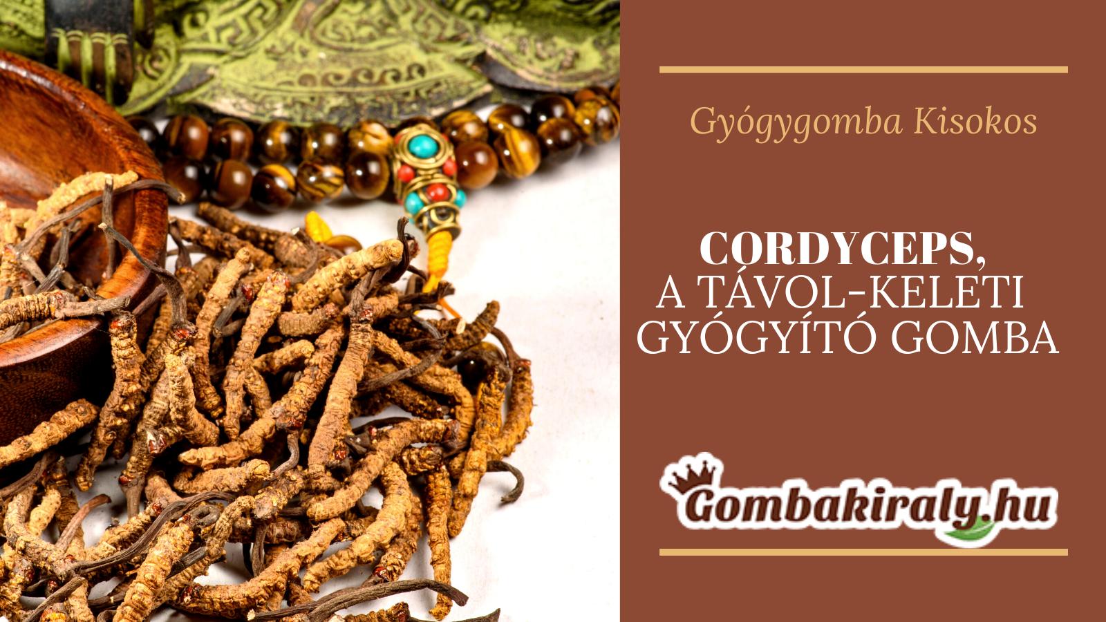 Cordyceps – a távol-keleti gyógyító gomba