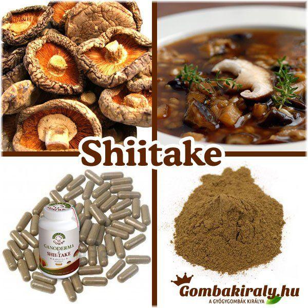 Hogyan lehet termeszteni a Shiitake gyógygombát?