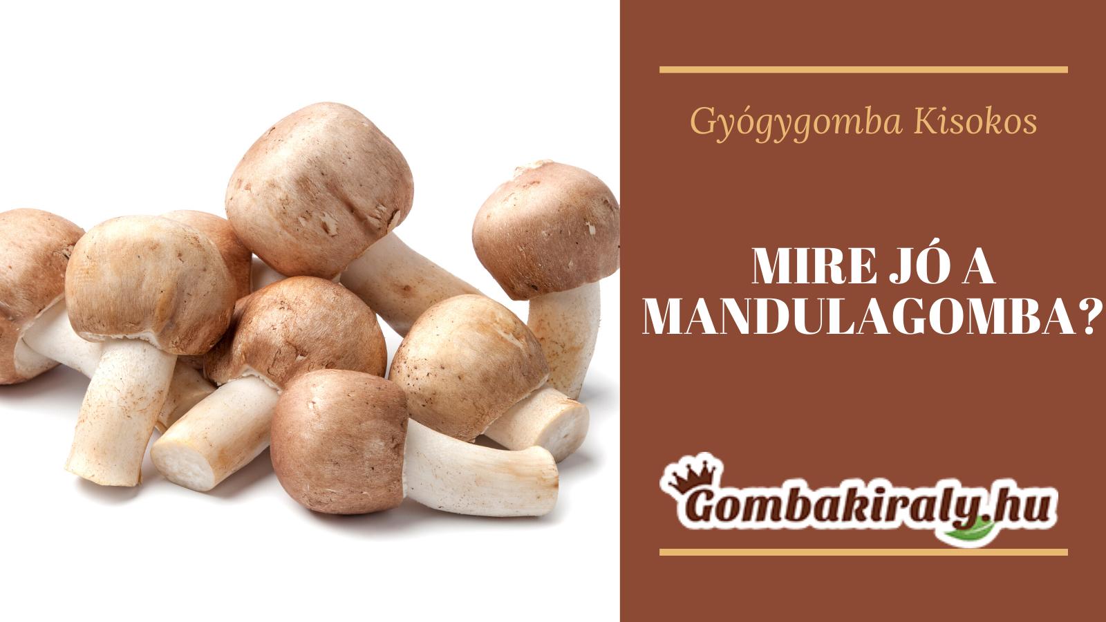 Mire jó a Mandulagomba?