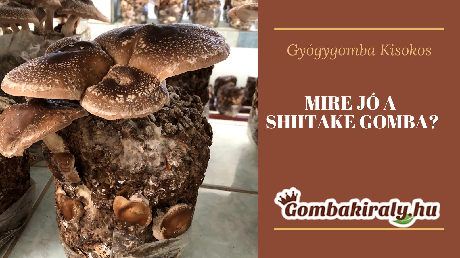 Mire jó a Shiitake?