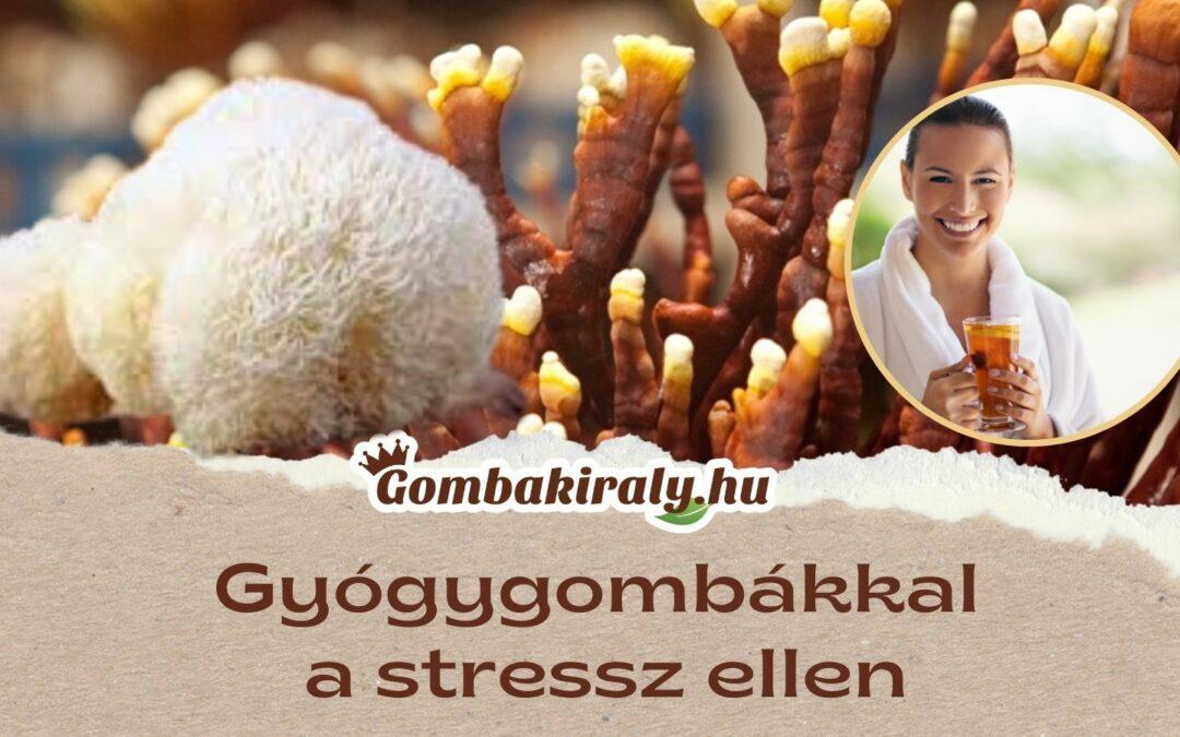 Gyógygombákkal a stressz ellen!