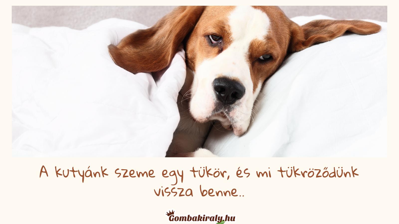 Kutyák és a gyógygombák