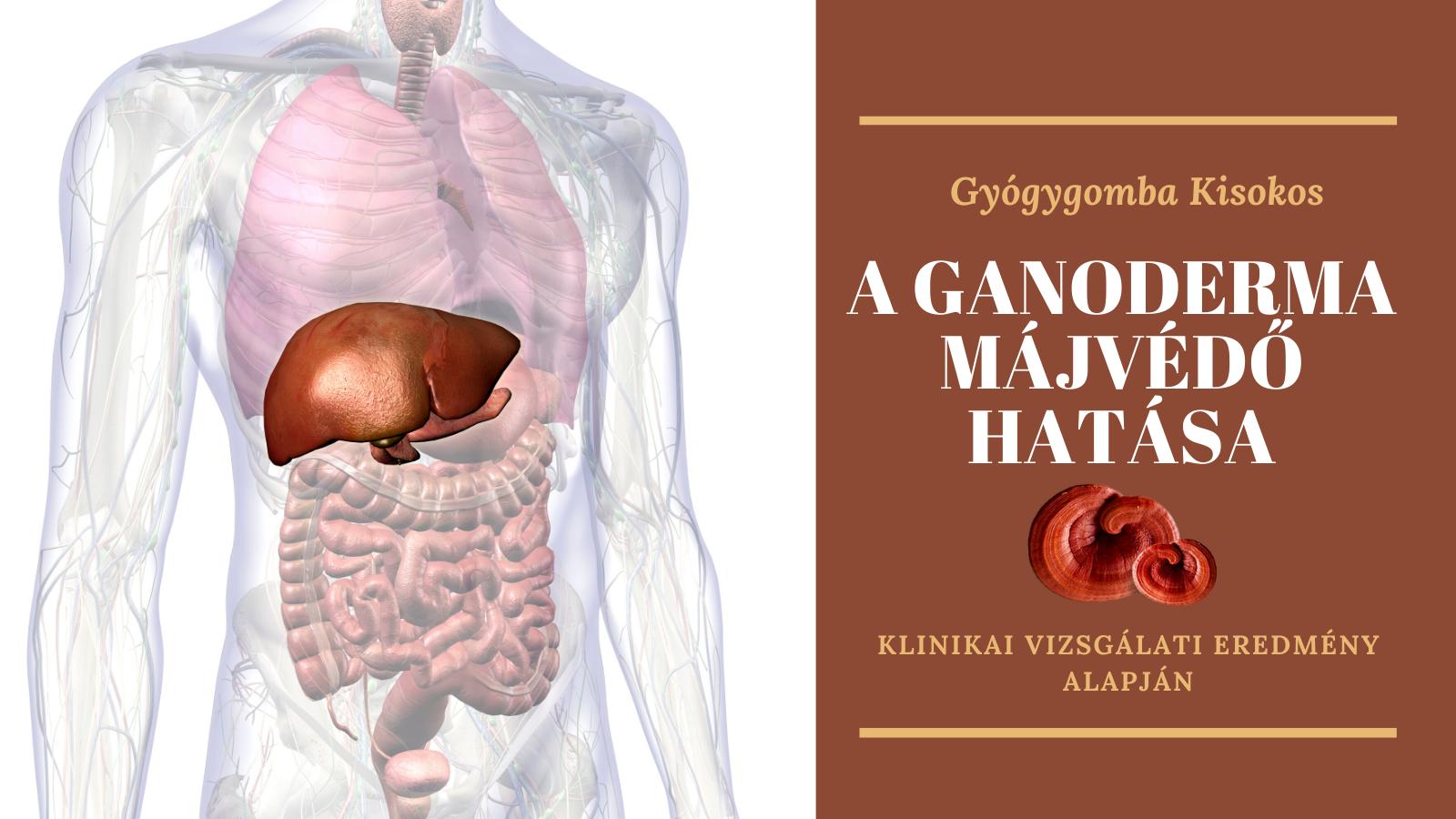 Klinikai vizsgálat a ganoderma májvédő hatásának bizonyítására!