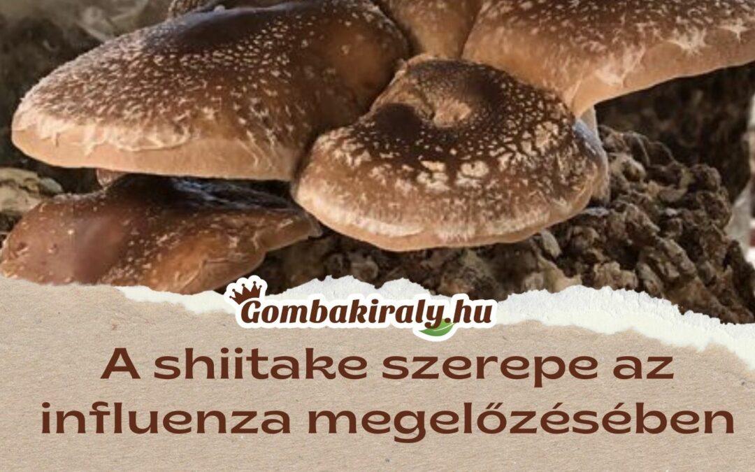 A shiitake szerepe az influenza megelőzésében