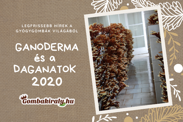 GANODERMA és a DAGANATOK 2020